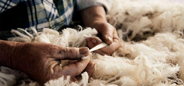 fibra de lana merino